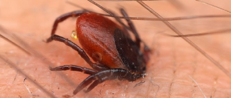 How do I recognise Lyme disease?